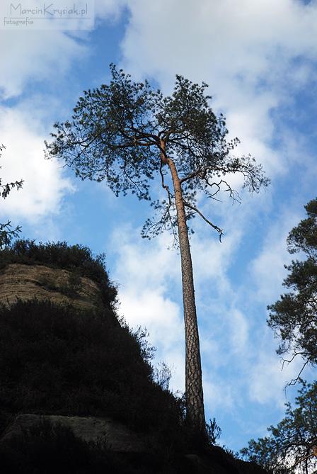 drzewo, niebo, chmury, skała, Skalne Miasto, Adrspach, Czechy