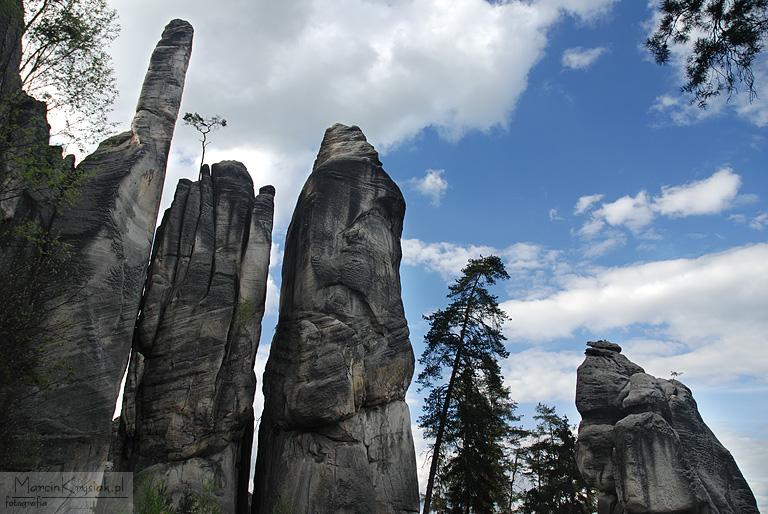 skalne, miasto, Adrspach, Czechy, drzewo
