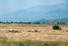 Albania - Gjirokastra - sierpieñ 2011