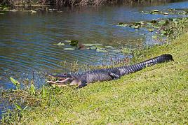 Stany Zjednoczone - Everglades - luty 2014