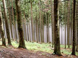 Polska - Beskid Żywiecki - sierpień 2006