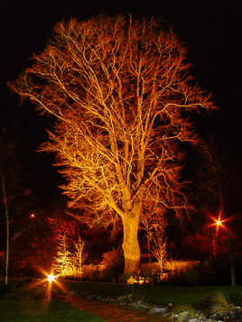 Irlandia - Newbridge - styczeñ 2007