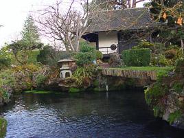 Irlandia - Kildare - styczeñ 2007